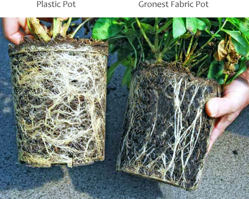 fabric pots vs plastic